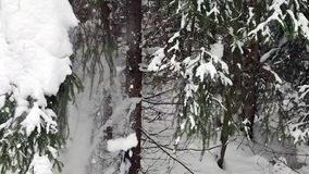 Falling snow in a winter park with snow covered trees. Winter forest walk. Falling snow in a winter park with snow covered trees. Winter forest walk stock footage