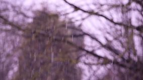 Falling snow in a winter park with slightly defocused trees background.  stock video