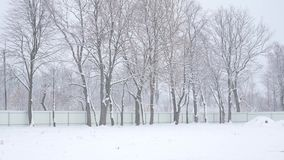 Falling snow in a winter park with snow covered trees stock video