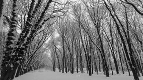 Falling snow in a winter park with snow covered trees.  stock video footage