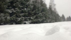 Falling snow in a winter park with snow covered trees. stock footage