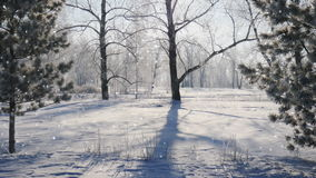 Falling snow in a winter park with snow covered trees, seamless loop. Falling snow in a winter park with snow covered trees stock footage