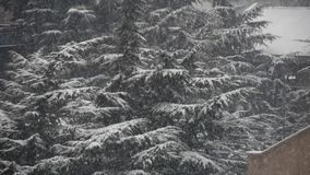 Falling snowflake,house & forest. stock video footage