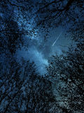 Falling star above the trees Stock Photo