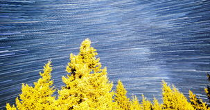Falling stars Comet mode Pine trees 4k tilt. A view of the stars of the Milky Way with a pine trees forest in the foreground. Comet mode Meteor Shower. Falling stock footage