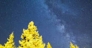 Falling stars pine trees Milky Way 4k. A view of the stars of the Milky Way with a pine trees forest in the foreground. Night sky nature summer landscape. Meteor stock video footage