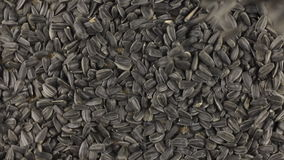 Falling sunflower seeds on the rotating circle of sunflower seeds lying on sackcloth. stock video