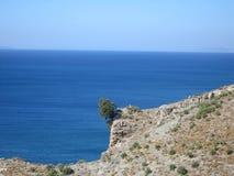 Falling Tree. Tree falling on the sea in Kos Island - Greece stock image