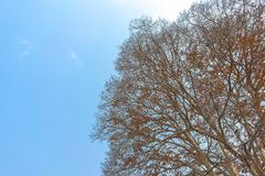 The falling tree with clear sky Royalty Free Stock Photography