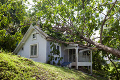 Falling tree after hard storm on damage house