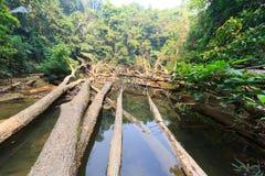 Falling trees Royalty Free Stock Photo