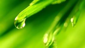 Falling waterdrop stock video footage