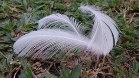 Falling White feather Stock Image