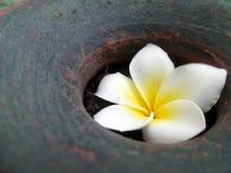 Falling white flower in garden vase Stock Photos
