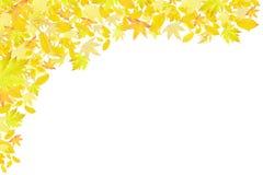 Falling yellow autumn leaves border. Isolated on white stock image