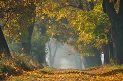Falling leaf in autumn. Falling yellow leaf in autumn stock image