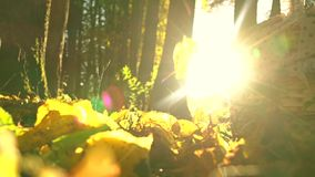 Falling yellow leaves against blazing sun and picnic basket. Sunny autumn day. Super slow motion shot