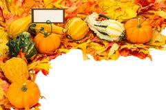 Fallkant av leaves och pumpor med kortet Royaltyfria Bilder