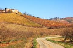 fallkullitaly piedmont vingårdar royaltyfri bild