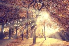 Falllandschaftsbäume der hellen Strahlen Stockbild