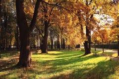 Falllandschaftsbäume der hellen Strahlen Lizenzfreie Stockbilder