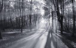 Falllandschaftsbäume der hellen Strahlen Lizenzfreie Stockfotos