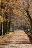 falllanepark Arkivfoto