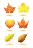 fallleaves royaltyfri illustrationer