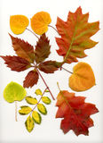 fallleaves royaltyfri illustrationer