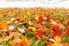 Fallleaves och snow Arkivbilder