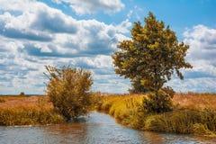 Fallliggande med floden Arkivfoton