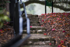 fallna blommor Arkivfoto