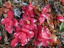 fallna blommor Royaltyfri Foto
