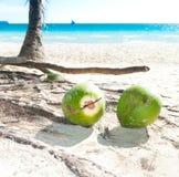 fallna kokosnötter Arkivfoton