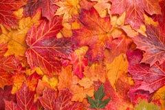 fallna leafs Arkivbild