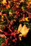 fallna leafs Arkivfoto