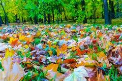 fallna leaves Royaltyfria Bilder