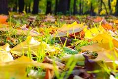 fallna leaves Fotografering för Bildbyråer