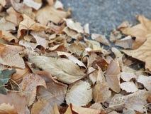 fallna leaves arkivbild