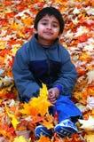 fallna leaves Arkivfoto