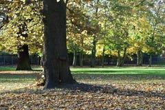 fallna leaves royaltyfri bild