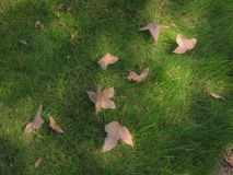 fallna leaves Arkivbilder