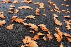 fallna leaves royaltyfri foto