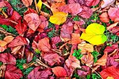 fallna leaves Royaltyfri Fotografi