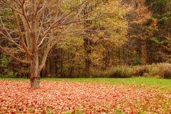 fallna leaves arkivfoton