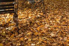 Fallna leaves i en park Arkivbilder