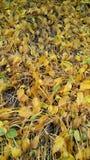 Fallna leaves i en park fotografering för bildbyråer