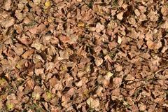 fallna leaves Texturera bakgrund Royaltyfri Foto