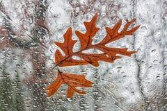 Fallna OakLeaves på windshielden Arkivfoto