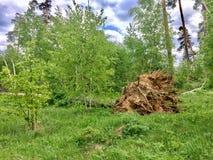 fallna trees Fotografering för Bildbyråer